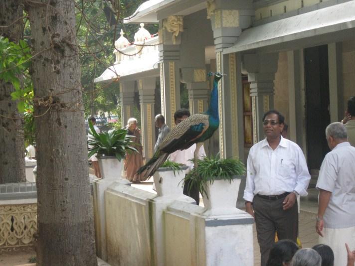 ramana-ashram-8